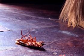 От чего умирают тараканы