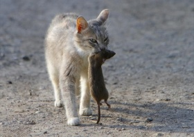 Уничтожение крыс в Москве. Обработка от крыс.