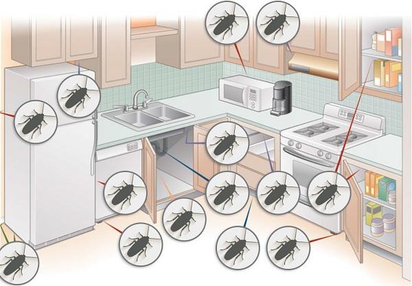Где прячется таракан на кухне