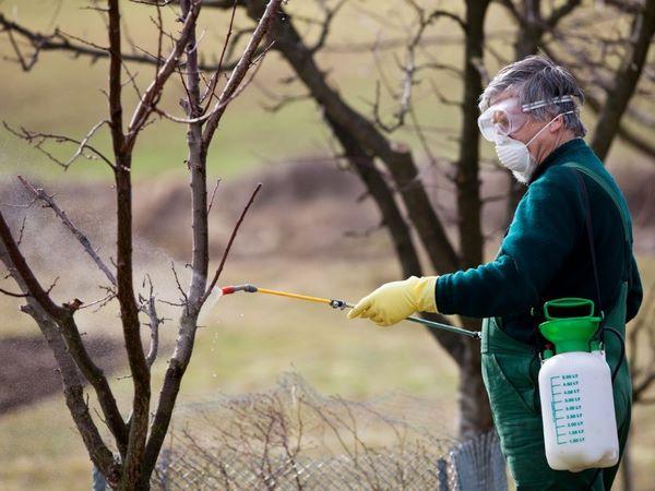 Картинки по запросу Как защитить плодовые деревья от вредителей